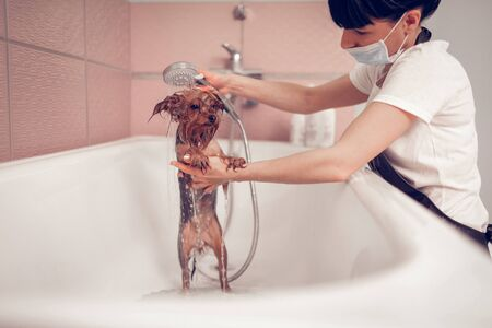 Shower time. Woman wearing mask washing cute little dog after shaving in salon