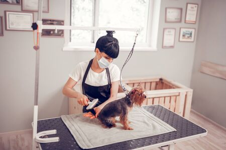 Brushing after washing. Top view of woman wearing mask and apron brushing dog after washing