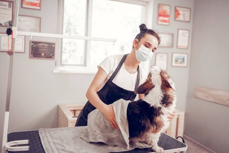 Woman drying dog. Dark-haired woman wearing mask and apron drying dog after washing him