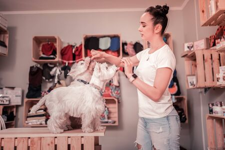 Time to eat. Young woman wearing jeans and white t-shirt feeding her cute fluffy dogs
