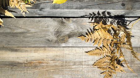 Autumn composition. Frame of autumn dry leaves on a wood background. Place to copy 写真素材