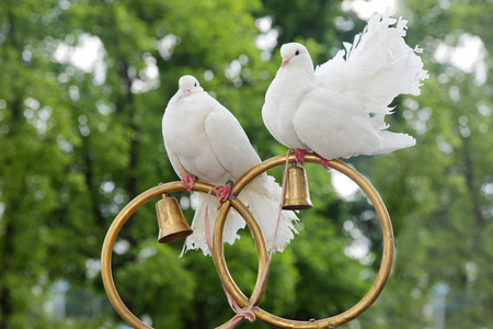 Wedding doves sit on gold rings Banque d'images