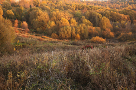 Landscape of autumn forest and field in real colors, illuminated by the setting sun