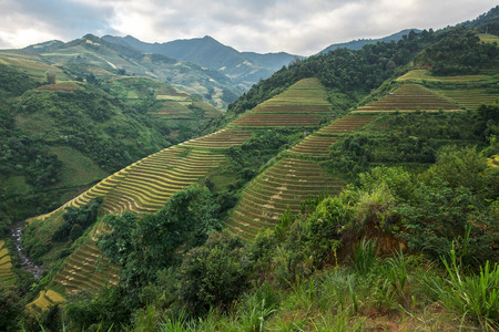 Paddies in the harvest,Mu cang chai,Vietnam. photo