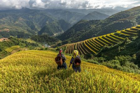 Los agricultores en los campos de arroz en terrazas de Mu Cang Chai, YenBai, Vietnam Foto de archivo - 39663553