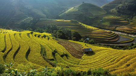 Rice fields on terraced of Mu Cang Chai, YenBai, Vietnam photo