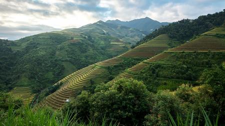 paddies: Paddies in the harvest,Mu cang chai,Vietnam. Stock Photo