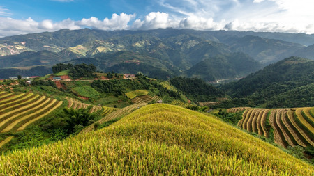 Rice terraces on the mountain in Mu cang chai,Vietnam. photo