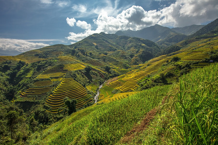 asia: Beautiful Rice Terraces
