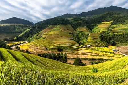 terraced: Rice fields on terraced of Mu Cang Chai, YenBai, Vietnam