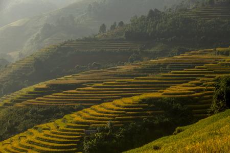 yuan yang: Terraced rice field in rice season Stock Photo