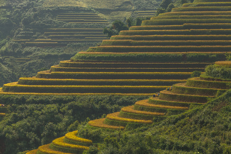 plough land: Beautiful Rice Terraces, South East Asia