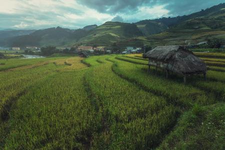 yuan yang: Rice fields on terraced of Mu Cang Chai, YenBai, Vietnam