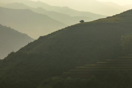 yuan yang: Rice terraces in the mountains,Yenbai,Vietnam.