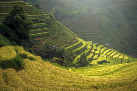 south east: Beautiful Rice Terraces, South East Asia,Yenbai,Vietnam
