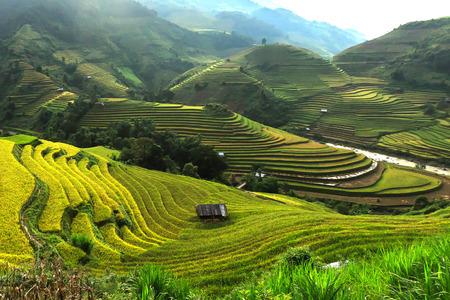 Rijstvelden op terrassen van Mu Cang Chai, YenBai, Vietnam.