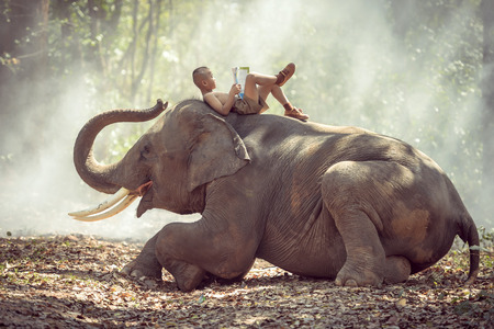 Thai little rural boy  was reading on elephant. Stock Photo