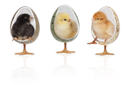 depicts: scene depicts one day chicks a rest in chairs, also included clipping path