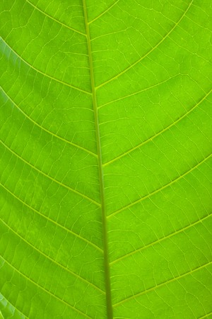 Leaf of a plant close up,possible use to background photo