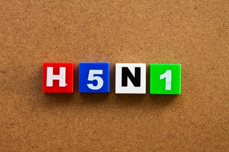 Alphabet blocks arranged horizontally on a reflective white surface to spell 'H5N1' Stock Photo - 7695929