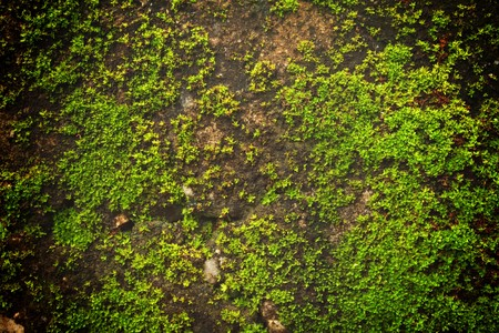 An image of a concrete wall with moss. Stock Photo - 7817502