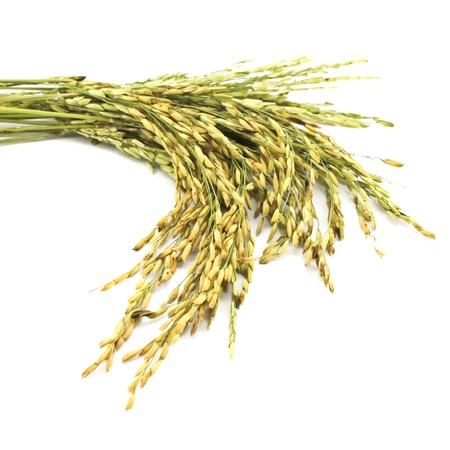 arroz blanco: trigo aislado sobre fondo blanco