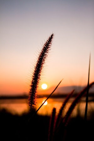 The silhouette grass in sunset,lonely feelling photo