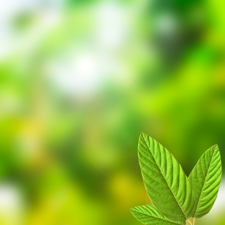 green leaves, shallow focus, fresh nature Stock Photo