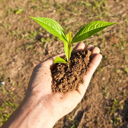 Tree seedling in hand photo