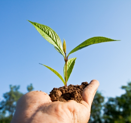 Tree seedling in hand Stock Photo