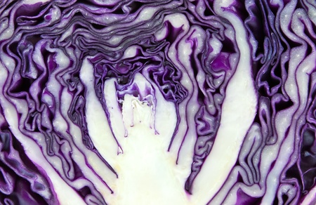fresh red cabbage photo