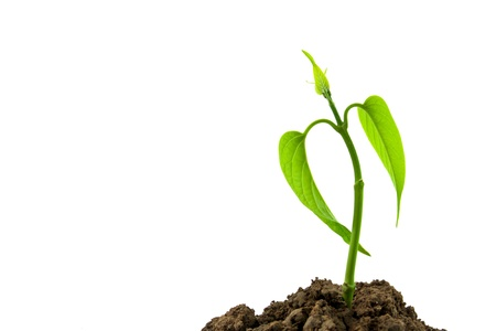 emerging economy: Bloom sprout from the soil isolated on white background, conservation concept