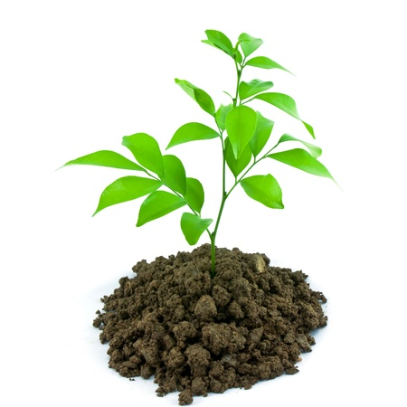 Bloom sprout from the soil isolated on white background, conservation concept Stock Photo - 10725326