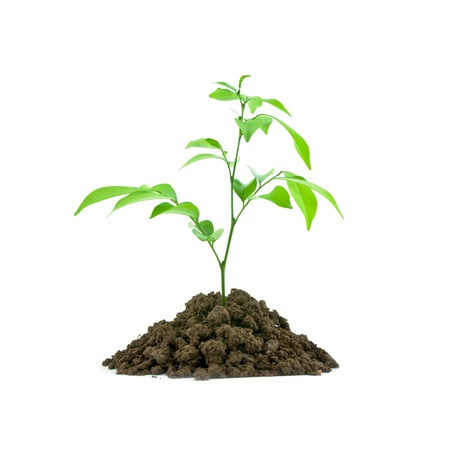 Bloom sprout from the soil isolated on white background, conservation concept photo
