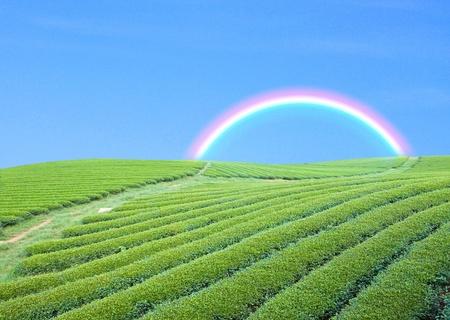 green garden andblue sky with rainbow