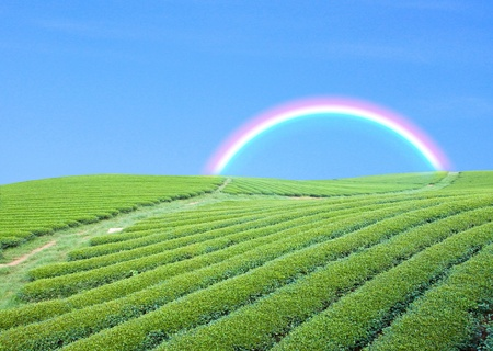 green garden andblue sky with rainbow