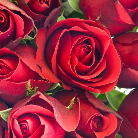 background of red rose Stock Photo
