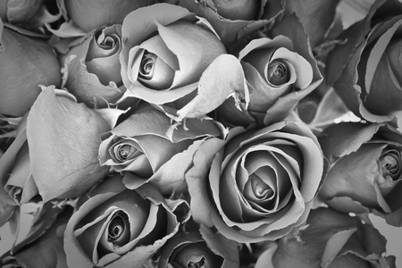 mourn: background of rose, black and white effect