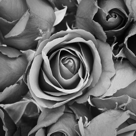 mourn: sfondo di rosa, effetto bianco e nero