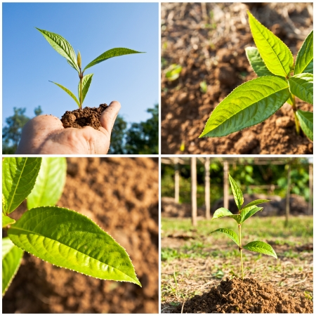 ecosavy: collage of plant Stock Photo