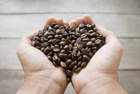 coffee beans in hand, heart shape photo