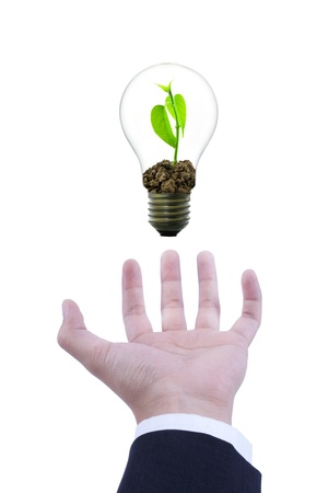 Small plant in light bulb, conservation concept photo