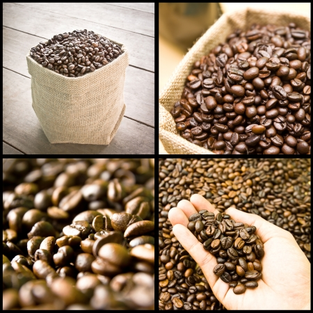 collage of coffee beans, seed, grain photo