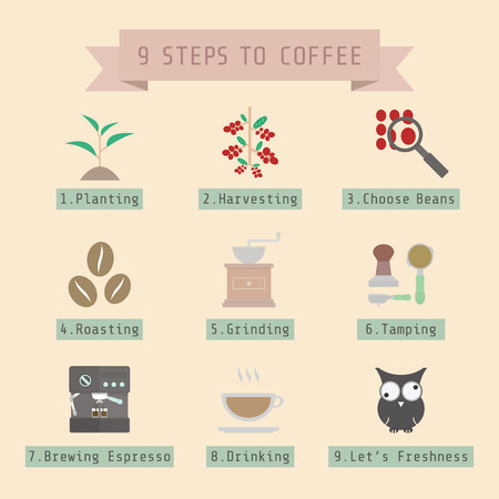 step of coffee process, young coffee sprout to espresso, flat style Vector