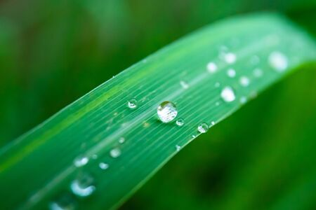 background of green leaf with drop