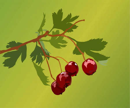 vectorial image of red berries on a green background
