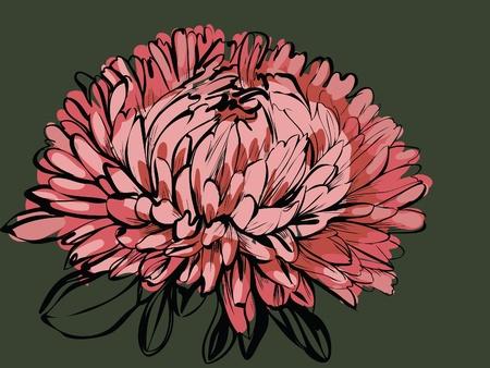 Imagen de plantas silvestres un Crisantemo de big bud