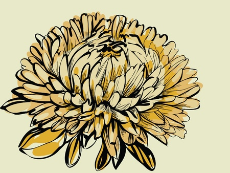 Image plants wildlife a big bud chrysanthemum