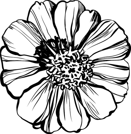 Image of wildlife a Major zinnias astereseae Illustration