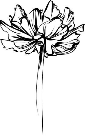 croquis d'une fleur avec des pétales de grandes Banque d'images - 9836099